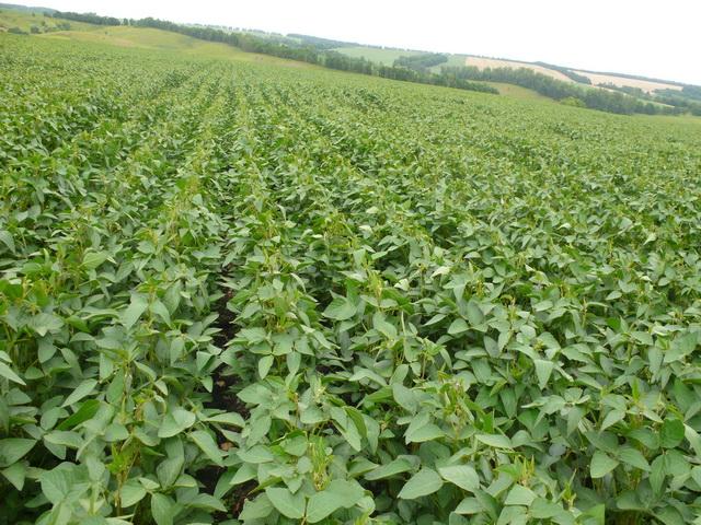 soybean.jpg